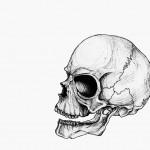Skull (1995)